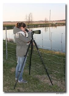 observatrice- club ornithologie Trois-Rivieres