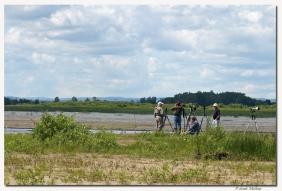 Pointe Yamachiche-club ornithologie Trois-Rivieres
