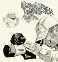 Le Regroupement QuébecOiseaux invite donc toute personne qui observe ou photographie les oiseaux à suivre les recommandations du présent Code de conduite, qui vise à protéger les oiseaux et leurs habitats ainsi qu'à préserver la popularité et la réputation du loisir ornithologique.